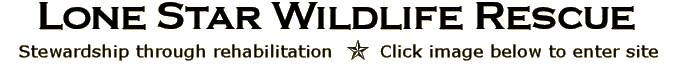 Lone Star Wildlife Rescue - Click to enter site