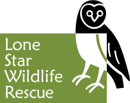 Lone Star Wildlife Rescue logo